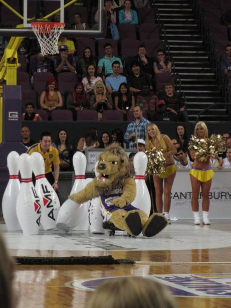 Sydney Kings lion
