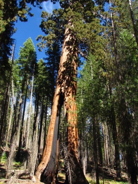 The Clothespine, Yosemite