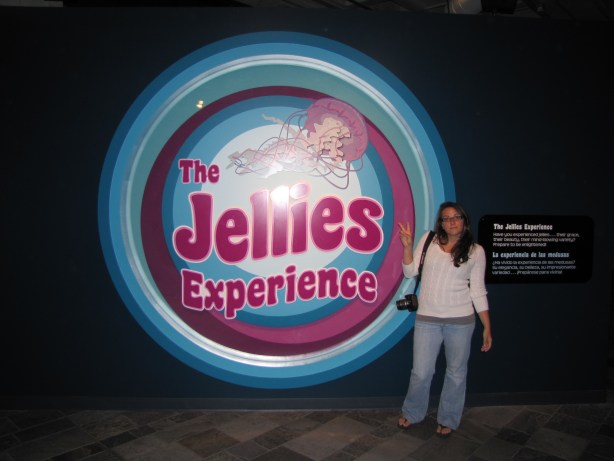 The very groovy Jellies Experience at Monterey Aquarium,