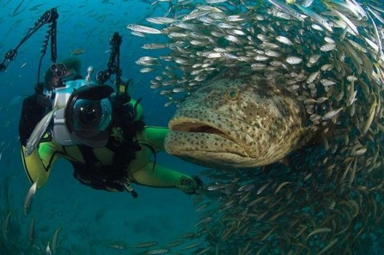 Photo courtesy of Asia Divers.
