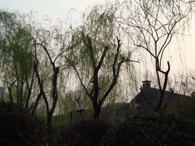 The sun sets behind the willow trees at the Nanjing Presidential Palace.
