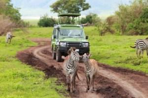 Operation: Safari in Tanzania