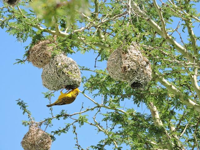 botswana-bird