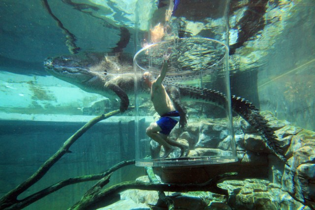 The cage of death might not live up to its name, but it's still an experience. Photo from Crocosaurus.