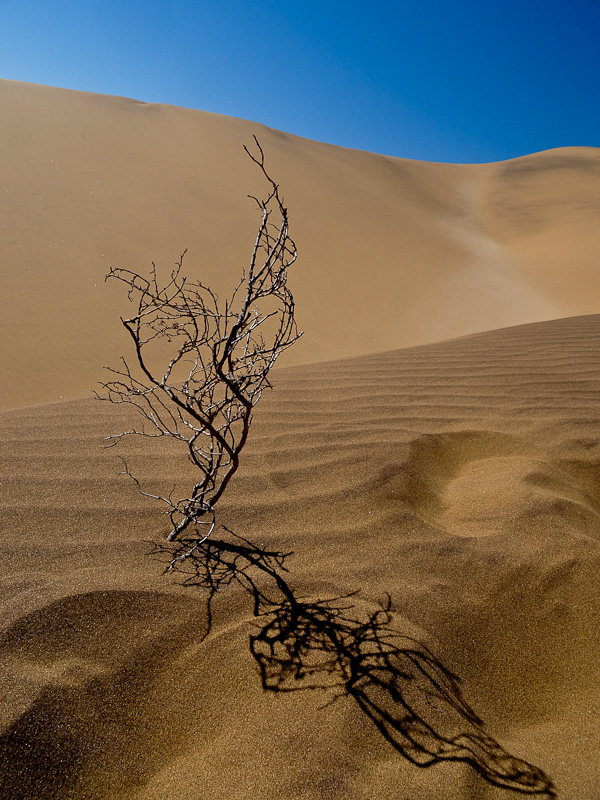 This is what I imagined counted as 'life' in the desert.