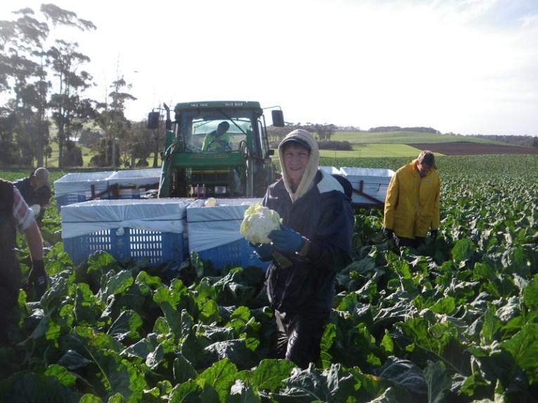 farm work australia working holiday