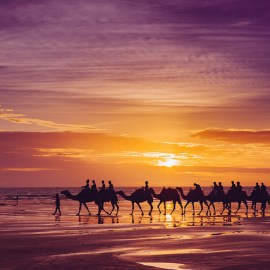 cable beach camel sunset