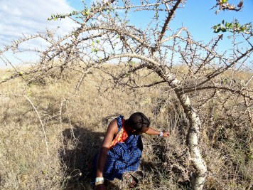 Our guide squats beneath a tree to tell us what role it plays in Masai life.