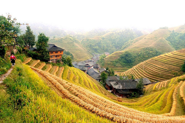 longsheng rice terraces dragon's backbone longji