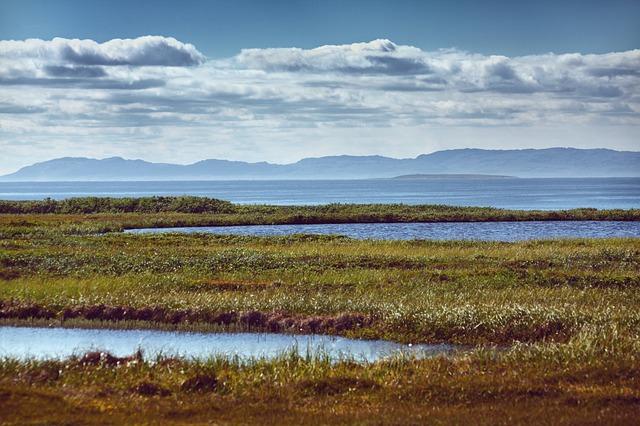 upo marsh