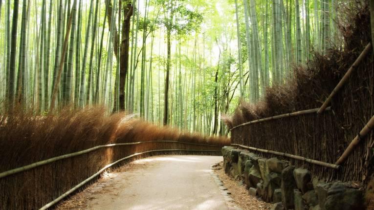 1 - Arishiyama Bamboo Forest