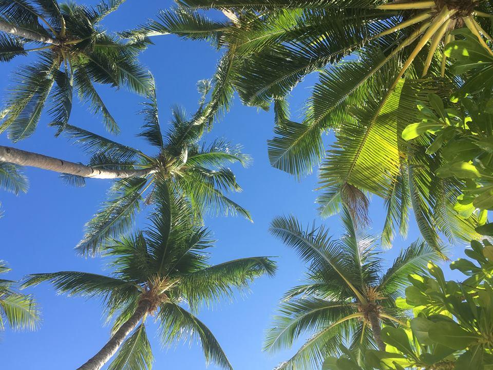 boracay palm trees