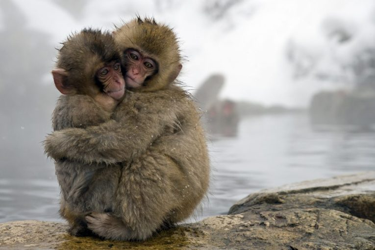9 - Jigokudani Macaque Monkeys