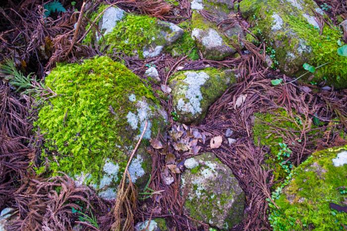 mossy stones kumano kodo