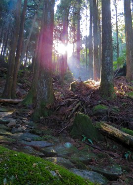 featured image kumano kodo iseji (1 of 1)
