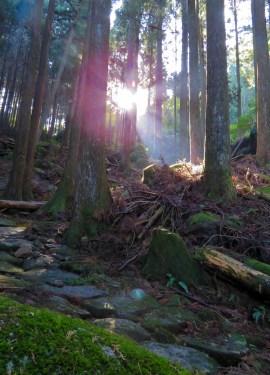 featured image kumano kodo iseji (1 of 1)