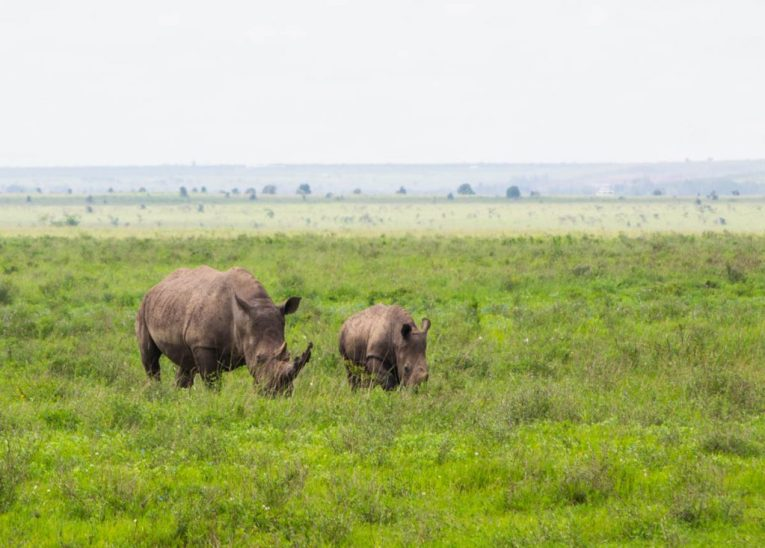 rhinos nairobi national park