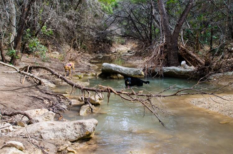 turkey creek emma long metropolitan park