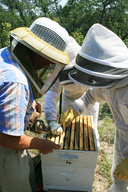 hive inspection danny weaver tanya phillips chuck reburn top bar