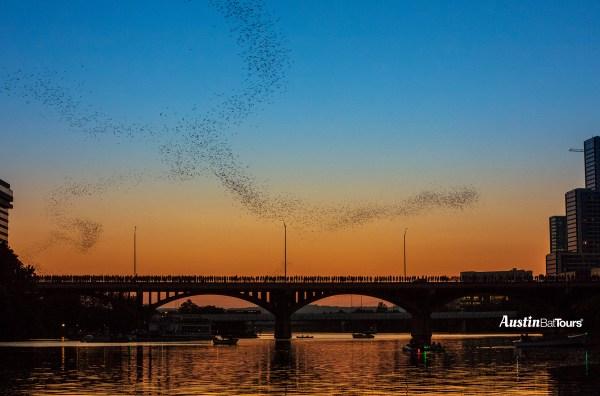 Austin's Congress Bridge Bats fly out from under the Congress