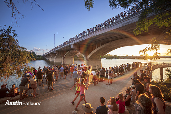 Bat enthusiast on top and below the Congress Avenue Bridge eager