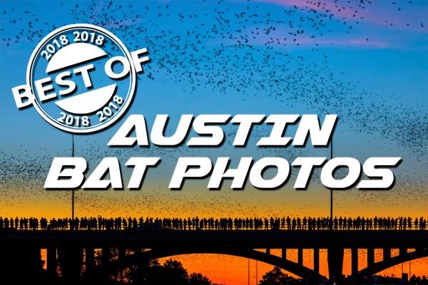 e30aeda8 Best of 2018 - Year in Review - Austin Bat Photos - Austin Bat Tours