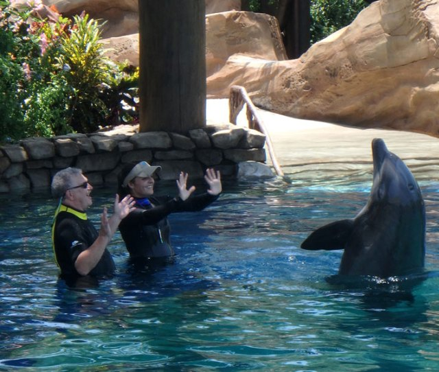 Day Trips Beyond Seaworld San Antonio Swimming With The Animals Travel The Austin Chronicle