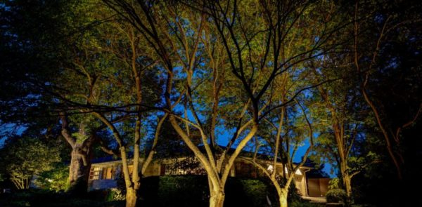 Light up your landscape @ night