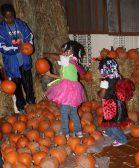 Kids search a pumpkin patch at Austin Town Hall. (Photos by Daisy Winfrey)