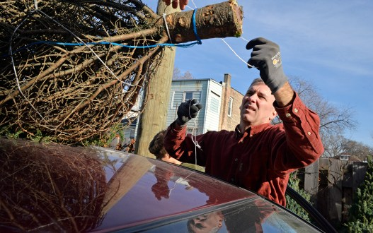 A member of The Church of Barrington ties a tree to the roof of an inner city families vehicle last Saturday during a a Christmas Tree giveaway at By The Hand Club For Kids on Laramie Avenue in Chicago's Austin neighborhood.