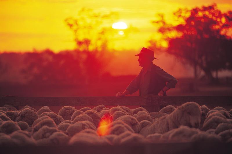 """Résultat de recherche d'images pour """"australian outback mouton tonte"""""""