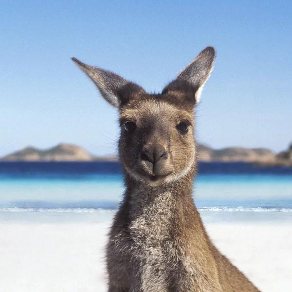 Image result for Australia?