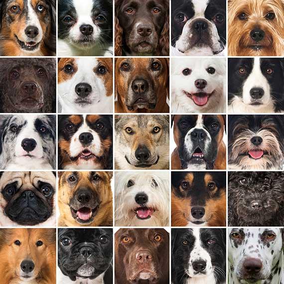 Why Medium Size Dog Breeds Rule