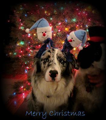 A Bleu Merry Christmas
