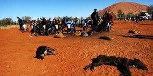 Аборигены Северной Территории