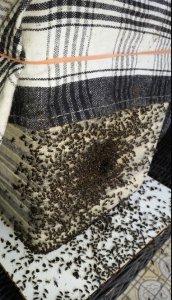 Fighting-swarm-2-