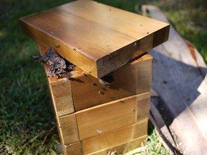 Native-bee-hive-box-2