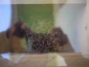 Native-bee-hive-design-1