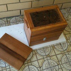 Native-bee-sales-2-