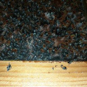 native-bee-sales