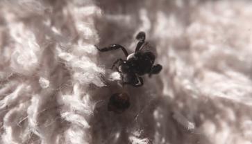Hive rubbish removal - Stingless bee