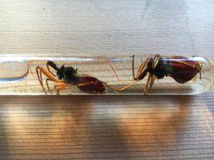 bee killer assasian bug pests