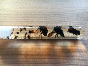 Bees in vile