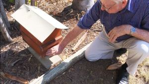 Tom carter showing the amount of workers in a stingless bee hive.