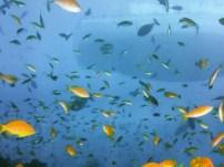 ITB-Berlin-2015-Malediven-unter-Wasser