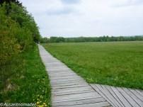 Schwarzes-Moor-Rhoen-02