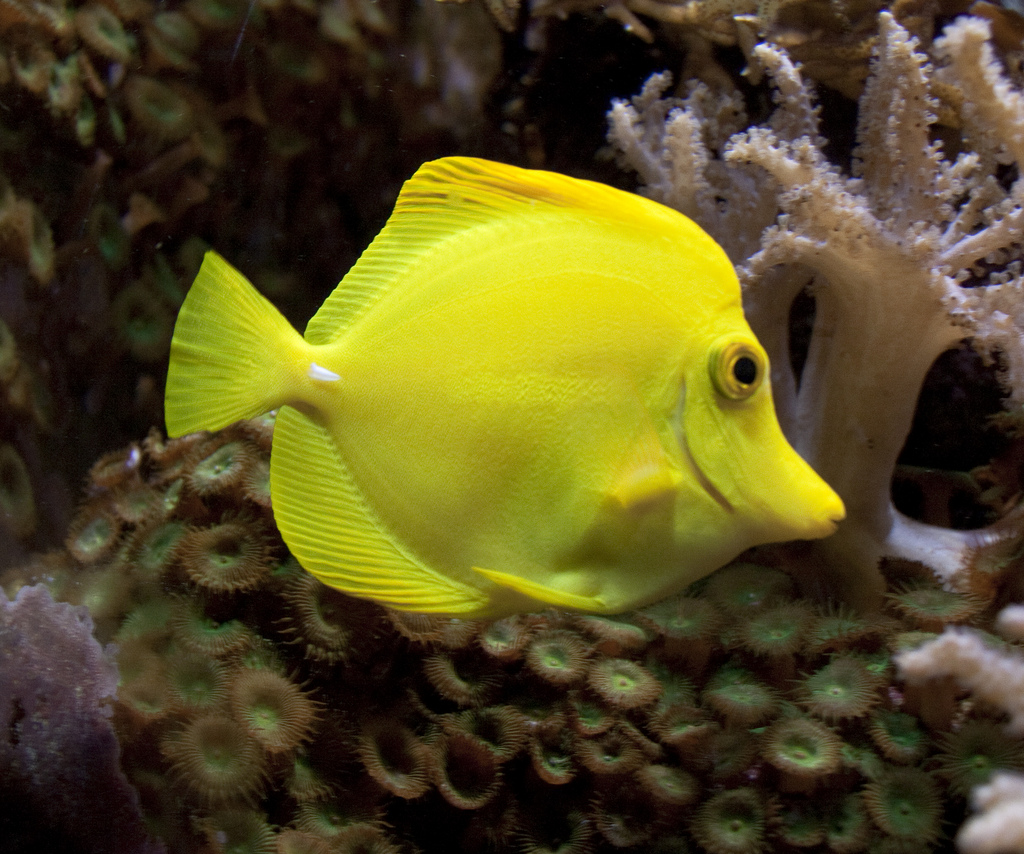 Best Saltwater Fish For The Advanced Fishkeeper