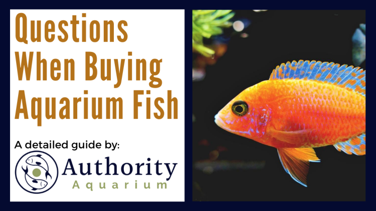 Questions When Buying Aquarium Fish