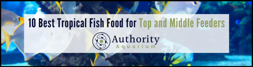 10 Best Tropical Fish Food for Top and Middle Feeders
