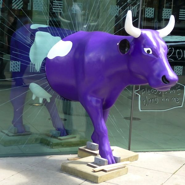 Are You a Purple Cow?